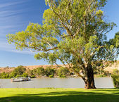 Murray river boat — Photo