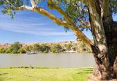 Murray River Boat — Stockfoto