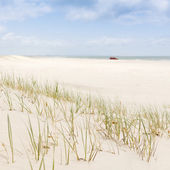 Beach Grass with 4WD — Stock Photo