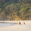 Kangaroos On Beach At Dawn — Stock Photo #37480305
