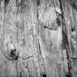Old Wooden Fence Black and White — Stock Photo