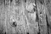旧木栅栏黑色和白色 — 图库照片