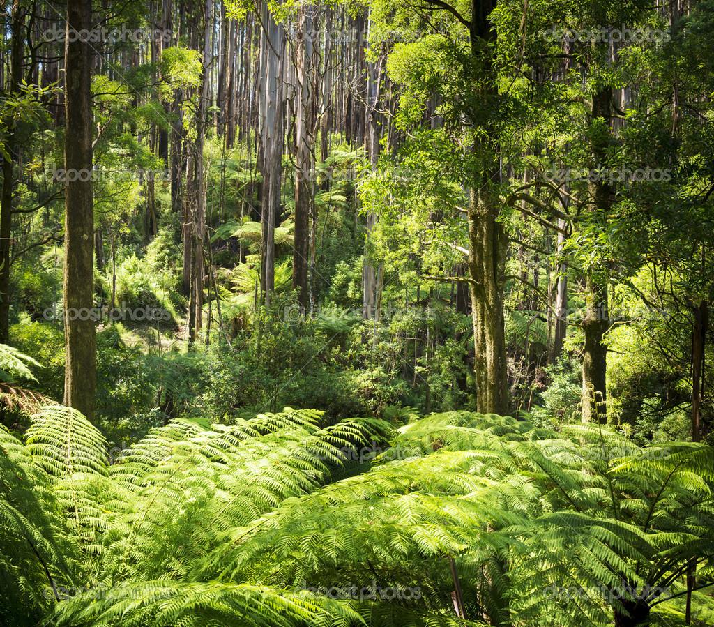 Foresta di felci foto stock thpstock 43856271 for Piani torreggianti