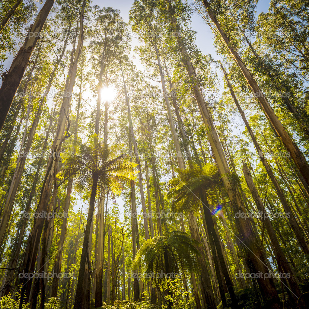 Foresta di felci foto stock thpstock 43856377 for Piani torreggianti