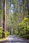 Estrada da floresta — Fotografia Stock