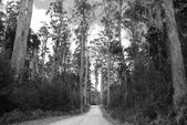 Forest Road — Photo