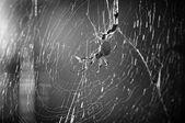 паук в паутине — Стоковое фото
