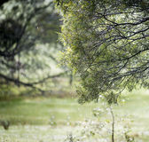 Rain Through Trees — Stock Photo