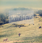 Winter Poster — Stock Photo