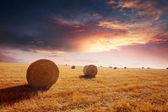 Warm Evening Hay Field — Stock Photo