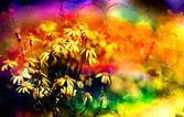 Daisy flower background. — Stock Photo