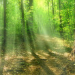 Light rays into the forest — Stock Photo