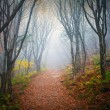 Fog Forest — Stock Photo