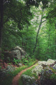 Old trail through the forest. — Stock Photo