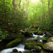 Sunlight over creek — Stock Photo
