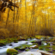Forest Stream in Autumn — Stock Photo