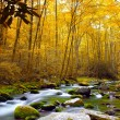 Forest Stream in Autumn — Stock Photo #30837133