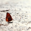 Butterfly sitting on the sand — Stock Photo