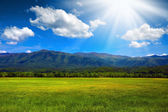 Sunny mountain meadow — Stock Photo