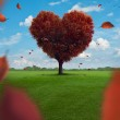 Heart Tree — Stock Photo #31276475