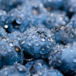 Wet blueberries close up — Stok fotoğraf