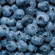 Wet blueberries background — 图库照片
