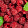 Raspberries with leaves — Stock Photo