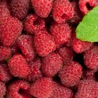 Raspberries with leaves — Stock Photo #12133343