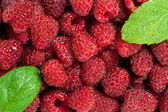 Raspberries with leaves — Stock fotografie