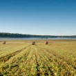 Wheat bales in morning — Stockfoto #31237823