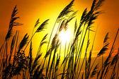 Coucher de soleil lac plantes soleil jaune orange — Photo
