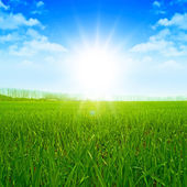 Sunset Sky Grass Field Meadow Shine — Stock Photo