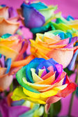 Multi-colored roses — Stock fotografie