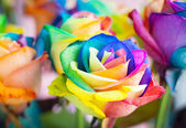 Multi-colored roses — Stok fotoğraf