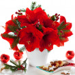 Christmas arrangement of amaryllis — Stock Photo