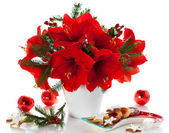 Christmas arrangement of amaryllis — Stock Photo