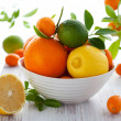 Stock Photo: Mixed citrus fruit