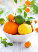 Mixed citrus fruit — Stok fotoğraf