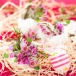 Pink flowers in eggshells — Stockfoto