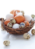 Eggs in a nest on a white background — Stock Photo
