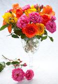 Multi-colored roses — Stock Photo