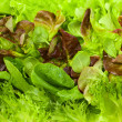 Fresh lettuces — Stock Photo