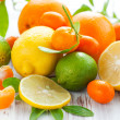 Citrus fresh fruits — Photo