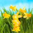 Easter rabbit on green grass — Stock Photo