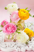 Colorful ranunculus — Stock Photo