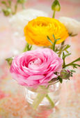 colorful ranunculus — Stock Photo