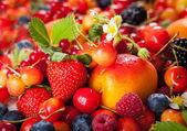 新鲜浆果 — 图库照片