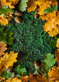 Acorns with autumn leaves — Stock Photo