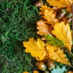 Autumn background — Stock Photo #51115125