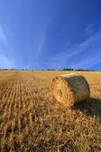 Golden haystack — Stock Photo